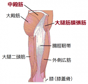 大腿筋膜張筋ポイント